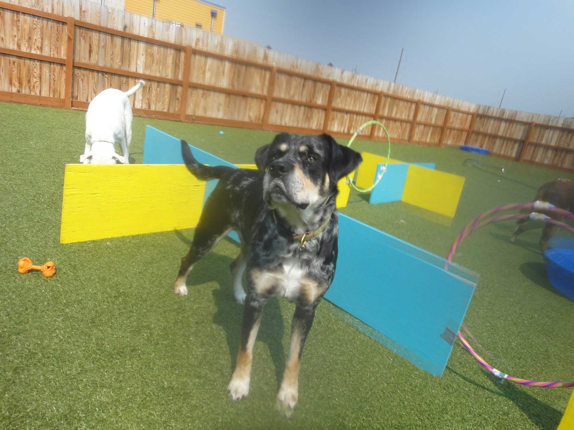 Doggy Daycare, Dog Boarding & Grooming | Bozeman, MT